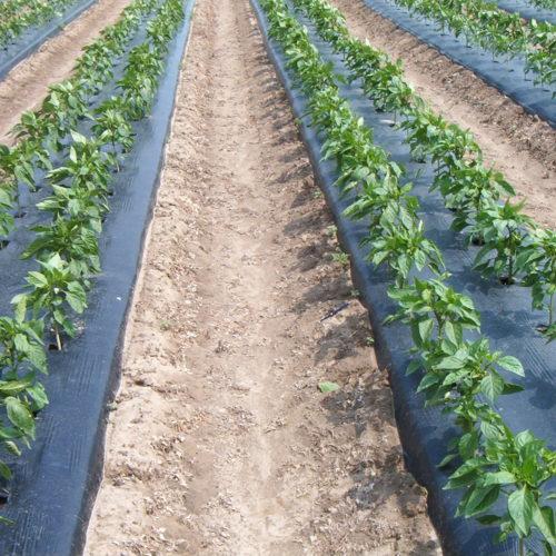 plasticos para el agro (1)