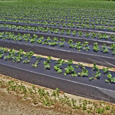 plasticos para el agro (2)