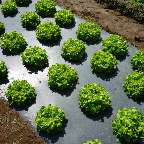plasticos para el agro (3)