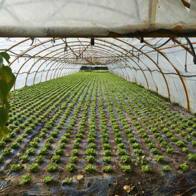 plasticos para el agro (5)
