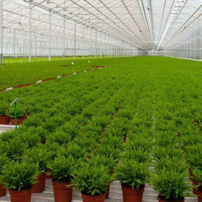 plasticos para el agro (6)